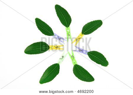 Fantasy abstract composition with transparency of leaves an clothes pin poster