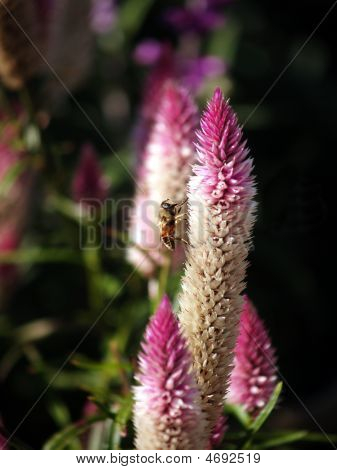 Cattails And A Bee