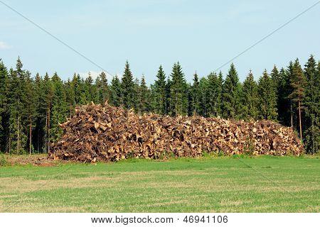 Heap Of Stump Wood As Logging Residue