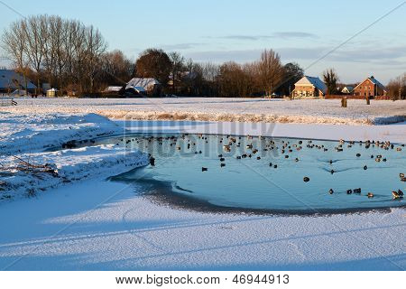 wild waterfowl on frozen lake in winter dutch farmland poster