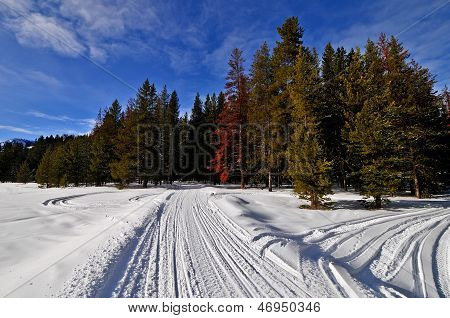 Snowmobile Trail Along Greys River, Wyoming
