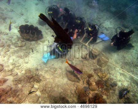 Škola potápění na velkém bariérovém útesu