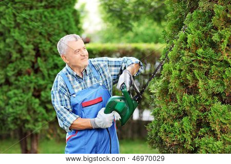 Manual worker trimming a tree in a garden poster