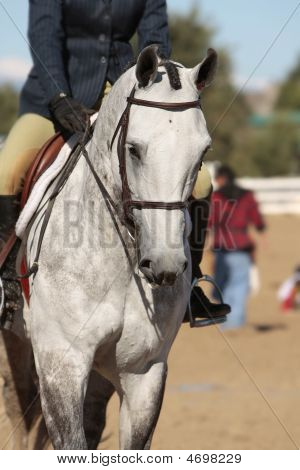 Elegant Horse And Rider