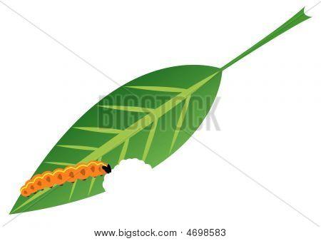 Caterpillar Eats Leaf