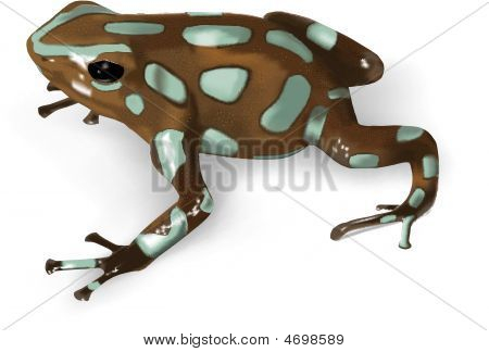 A vector illustration of Green and Black Poison-Dart Frog (Dendrobates auratus) - AI 8 EPS. poster