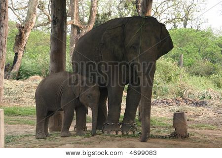 Elephants In Nepal