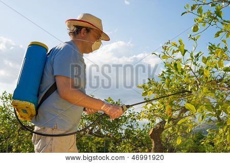 Spraying A Citrus Plantation