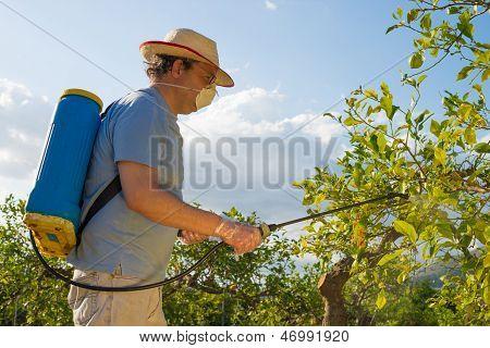 Sprühen eine Citrus Plantage