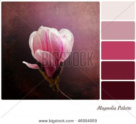 A a single pink magnolia flower on a vintage style background,  in a colour palette with complimentary colour swatches.