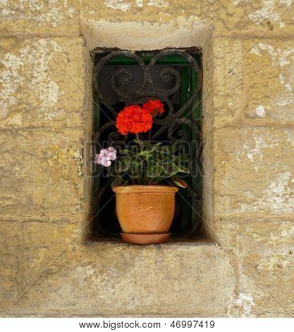 Red geranium in rustic window
