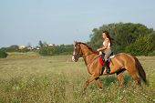 Beautiful girl riding a horse in countryside poster
