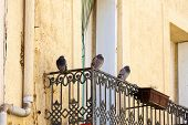 Pigeons sit on a balcony railing on a medieval house in Gruissan southern france poster