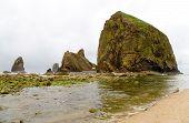 Algae covered monolith rocks at ocean beach bird sanctuary poster