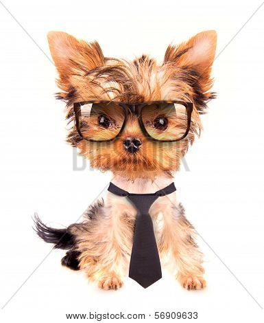 business dog with tie and glasses on white poster