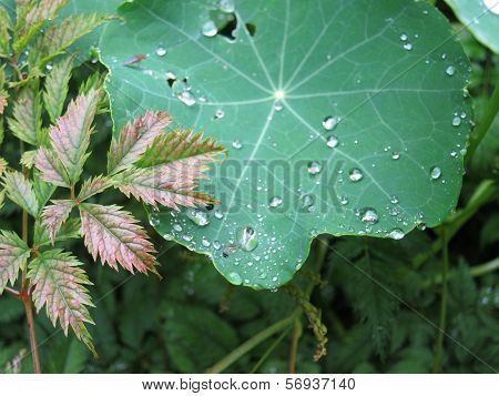 Dew and leaves