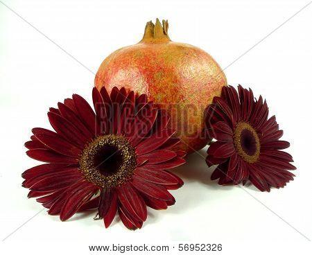 gerbera with pomegranate