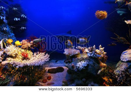 Underwater background - fishes and coral. Aqua, sea poster
