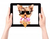 puppy dog licking with ice cream on a digital tablet screen poster