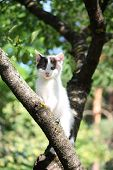 Small cute kitten climbing the tree in the garden poster