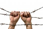 hand behind barbed wire on the white background poster