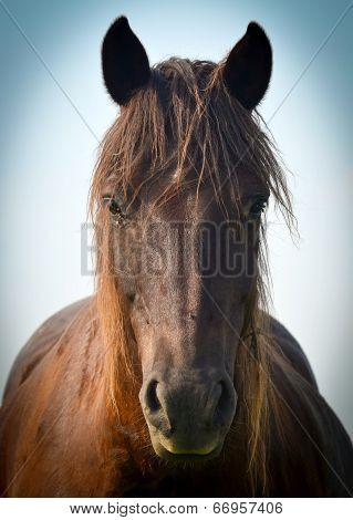 Wonderful closeup photo of brown horse muzzle poster