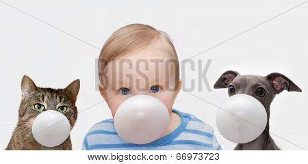 Boy, Dog And Cat With Chewing Gum