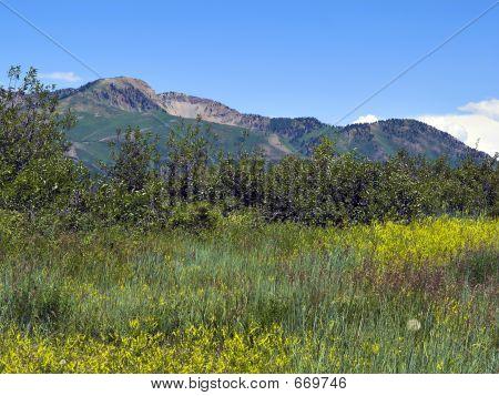 Utah Mountains - 4