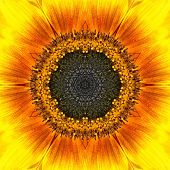 Yellow Mandala Concentric Sunflower Flower Kaleidoscope Center. Kaleidoscopic Design Pattern poster