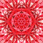 Red Mandala Concentric Flower Kaleidoscope Center. Kaleidoscopic Design Pattern poster