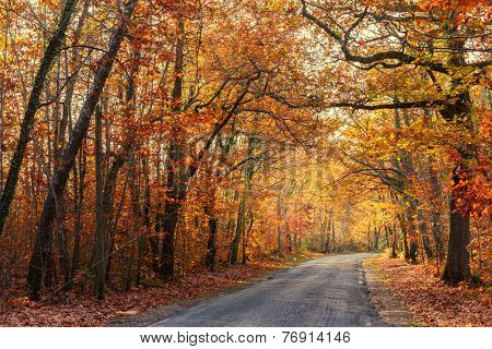 Road passing through a beautiful temperate forest at fall, France