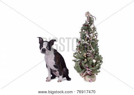 Poopsie Christmas By Tree