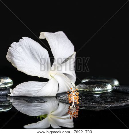 Cryogenic Spa Concept Of Delicate White Hibiscus, Zen Stones With Drops And Ice On Reflection Water,