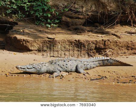 Crocodile in Sumidero Canyon