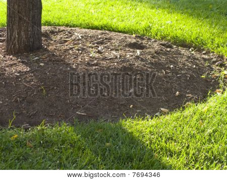 Mulch around a tree