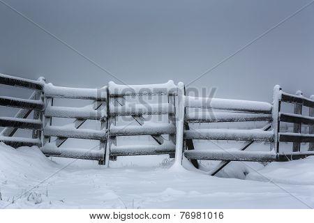 Frozen Wooden Fence