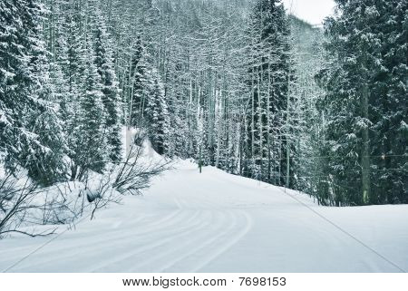 ski prints trough the snowy forest in vail colorado poster