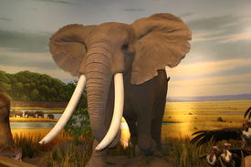 Elphant in a nature background in a store