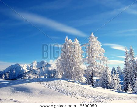 Gorgeous Winter Landscape