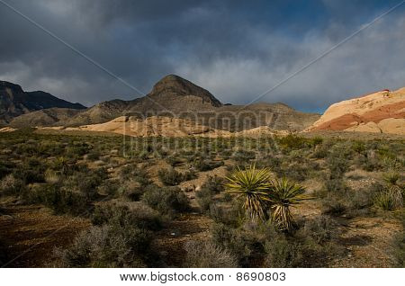 Red Rock Canyon Floor