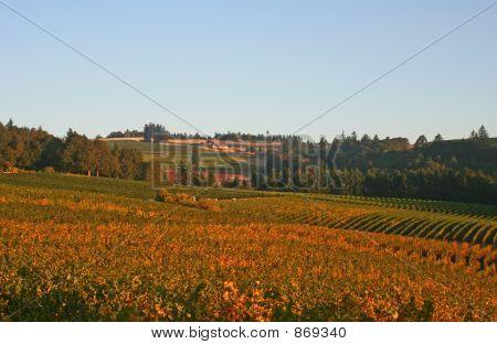 Valley of Vineyards