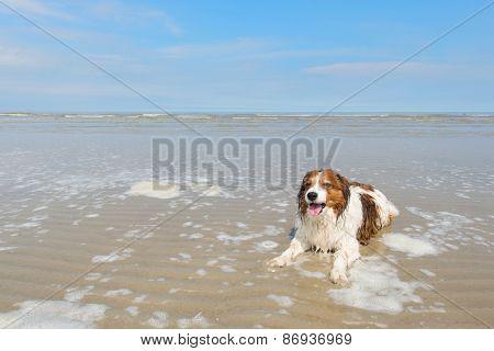 Dog swimming in North sea beach at Dutch wadden island Terschelling