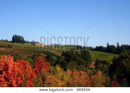 Vineyard Fields in Autumn