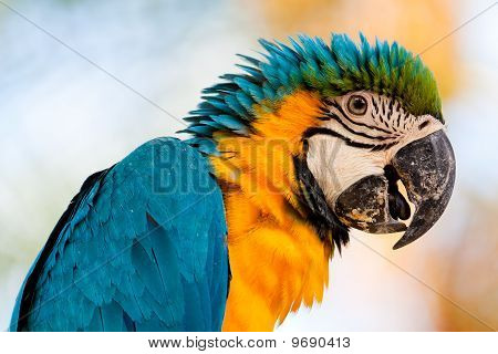 Colorful parrot #1