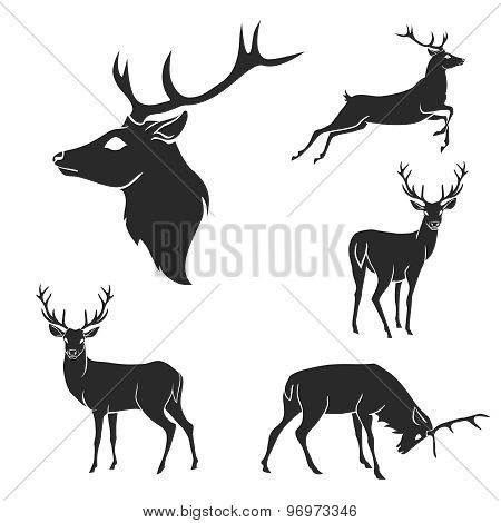 Set of black forest deer silhouettes. Suitable for logo, emblem, pattern, typography etc. Isolated b