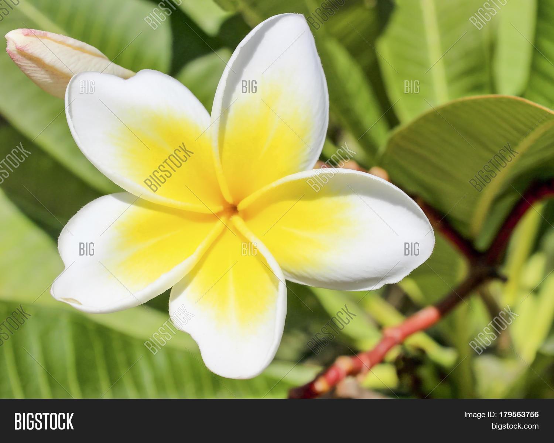 Blown White Yellow Image Photo Free Trial Bigstock