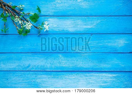 Background of narrow wood planks painted in blue. Bunch of blooming apple tree and young black current twigs
