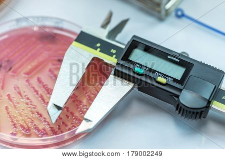 The Tools For Measuring Zone Size Of Bacteria As Sub Sensitivity Test For Laboratory In The Hospital