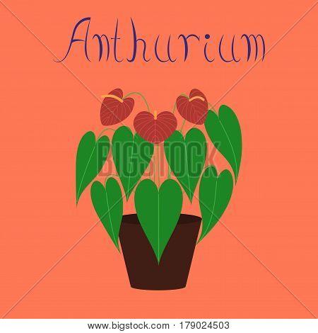 flat illustration on stylish background plant Anthurium
