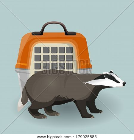 Badger and animal carrying case isolated on grey background. Short-legged omnivorous badger with black and white coat side view. Vector illustration of transportation bag and beast